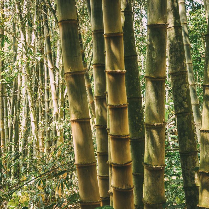 ökoRAUSCH Blog – santai