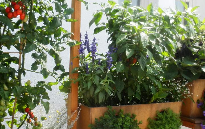 Geco-Gardens Kleingärten